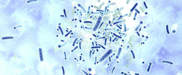 Gute Bakterien helfen bei der Verdauung im Darm. Darmflora aufbauen und durch gesunde Bakterien im Darm.