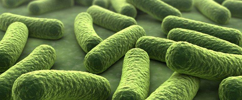 glossar gesunde bakterien. Black Bedroom Furniture Sets. Home Design Ideas