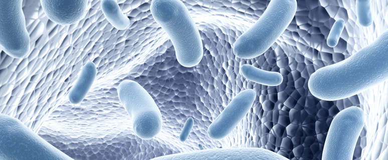 Bakterien im Darm: 100 Billionen Freunde. Bacteria in the gut